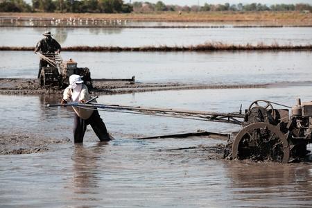 agriculteur avec tracteur dans les plantations de riz. Banque d'images
