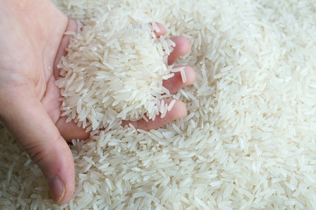 jasmine rice: hand holding thai jasmine rice