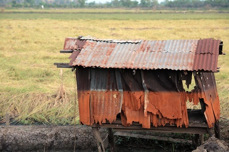 rusty shed in paddy field  photo