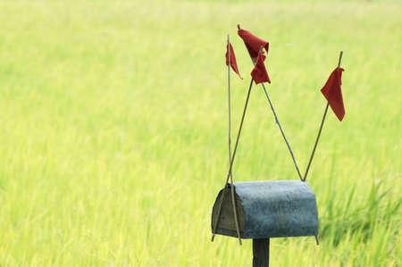 paddy: tradition paddy field