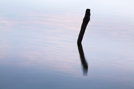 stump in water with sky reflection  photo