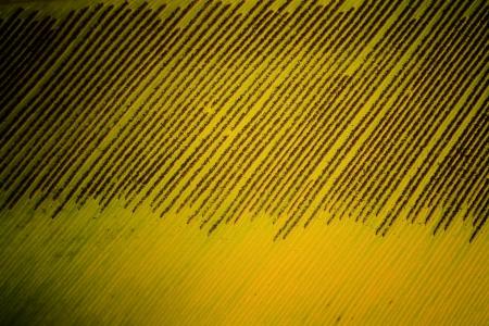 spore: abstract spore of bird