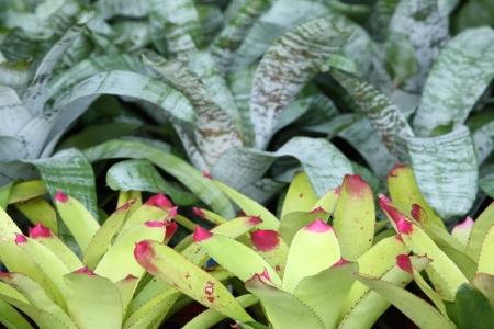 bromiliad background  photo