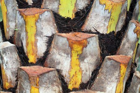 boom kappen: textuur van palmboom, snijden door menselijke
