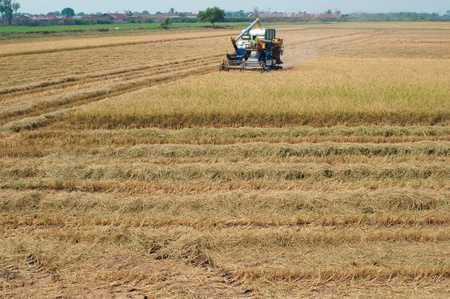 farmer using machine harvest in paddy field  photo
