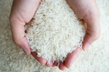 thai jasmine rice on hand  Stock Photo