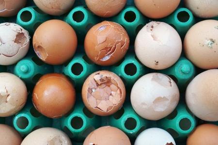 cracked egg photo