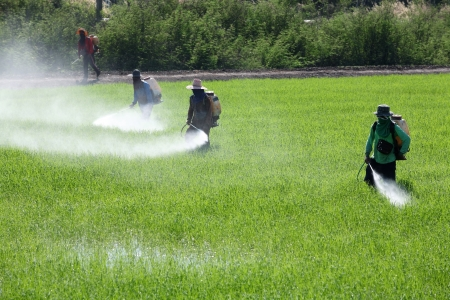 worker spraying pesticide in field