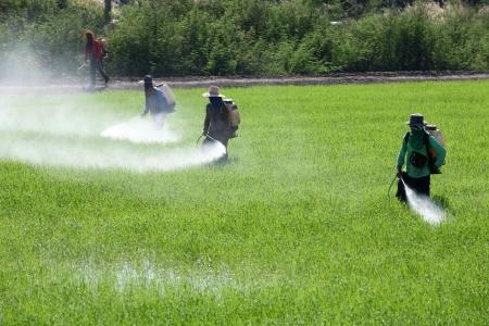 worker spraying pesticide in field
