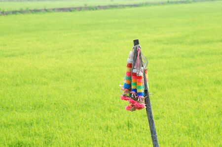 colorful garland with paddy field background  photo