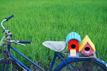 colorful bird house on classic bicycle with green paddy field background  photo