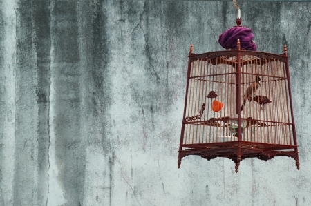 birdcage of red-whiskered bulbul with grunge wall background  写真素材
