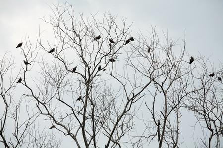 bird on dry tree  photo
