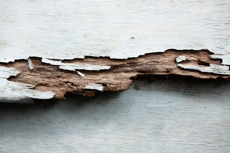 balsa: wooden panel decay from termite
