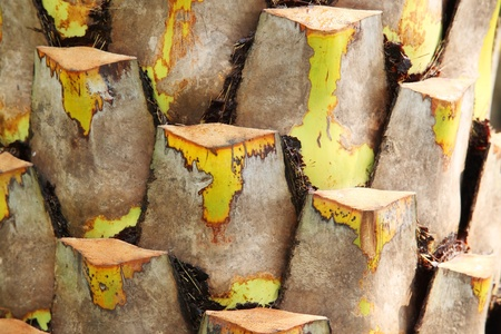 boom kappen: een textuur van palmboom, snijden door de mens