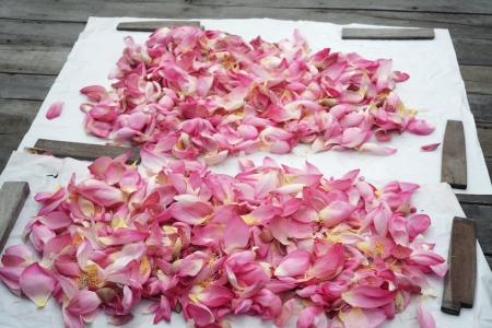 drying lotus petal,using for herb  photo