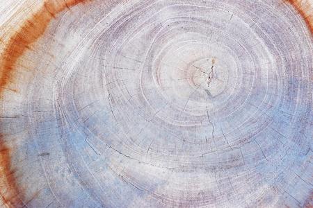 anual ring of tamarind wood. photo