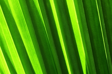 abstract palm leaf  photo