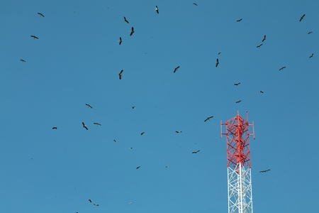 lot of birds above blue sky  photo