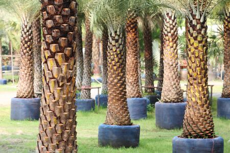 palm garden: palm garden  Stock Photo