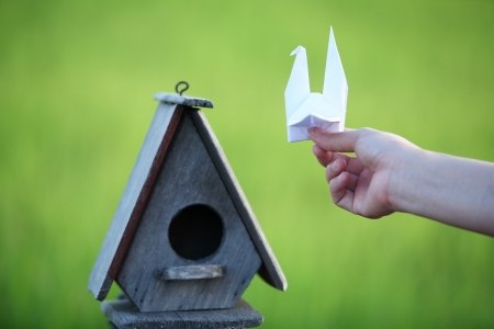 hand hold origami bird to birdhouse  photo