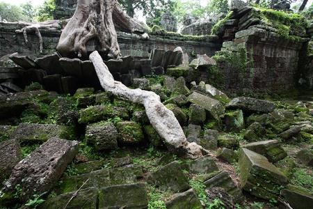 phrom: Ta Prohm Temple, Angkor Wat, Cambodia