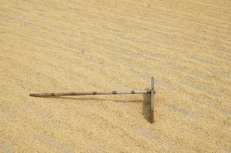 harrow: bamboo harrow on rice grain