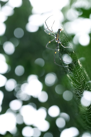 spider web and beautiful bokeh photo