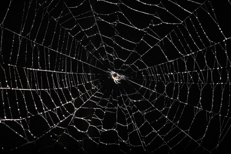 spider web isolated on black background photo