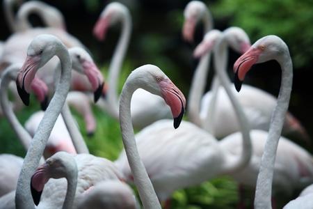 flamenco ave: flamingo bird Foto de archivo