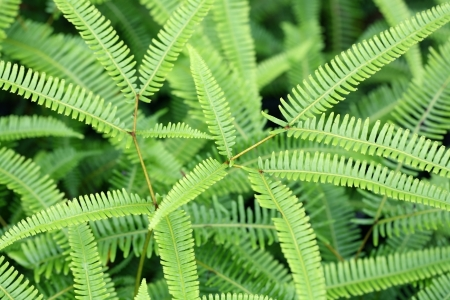 fern in forest  photo