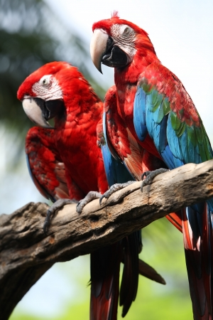 macaw in zoo  photo