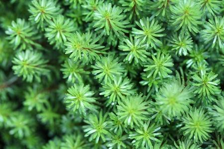 algae pattern Stock Photo - 22127731