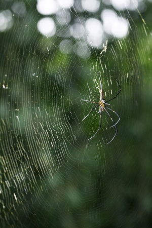 spider web with beautiful background  photo