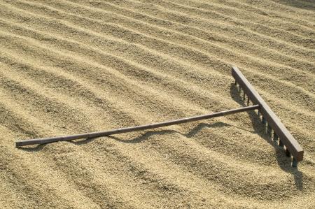 harrow: wooden harrow on drying rice field.