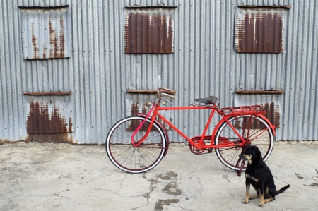 colorful classic bicycle with dog photo