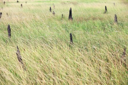 field of termite hill. Stock Photo