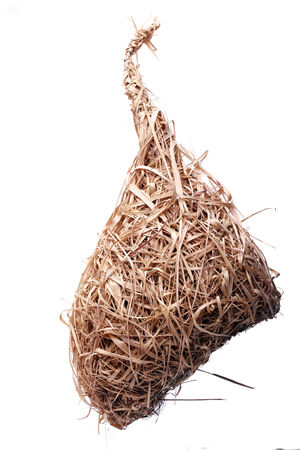 weaver bird nest: weaver bird nest isolated on white background Stock Photo