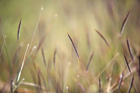 shallow: abstract of reeds grass shallow dof.