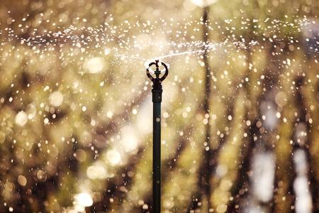 irrigation field: sunset scene of water sprinkler Stock Photo