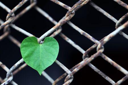 rusty fence: heart shape leaf at rusty fence