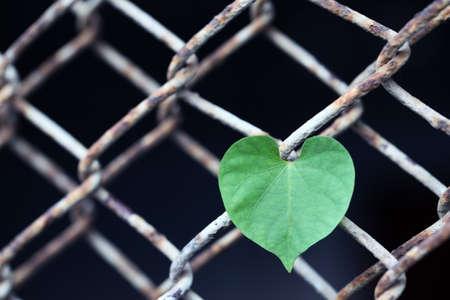 rusty fence: heart shape leaf on rusty fence