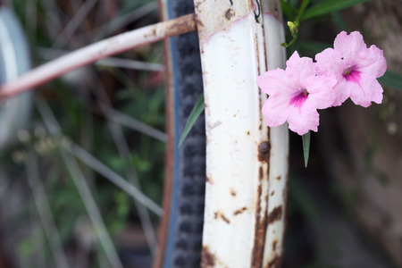 colorful flower on rusty bicycle wheel photo