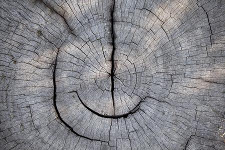 texture of old stump photo