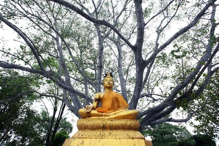 buddha image under the tree photo