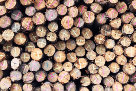 stack of log wood as background photo