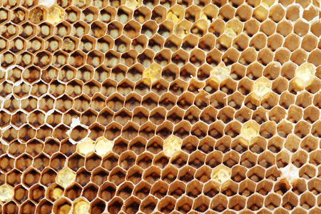 honeycomb texture as background. photo