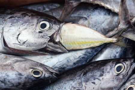 smaller: bigger fish eat smaller fish