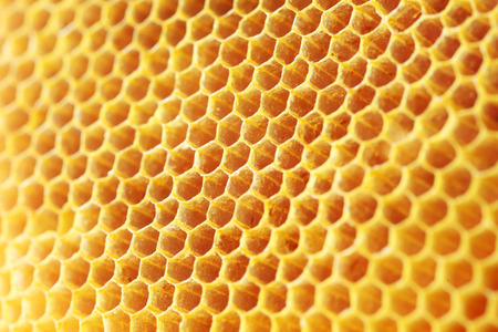 golden color honey comb as background. Stock Photo