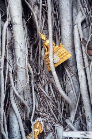 cabeza de buda: imagen de Buda en el �rbol como fondo.